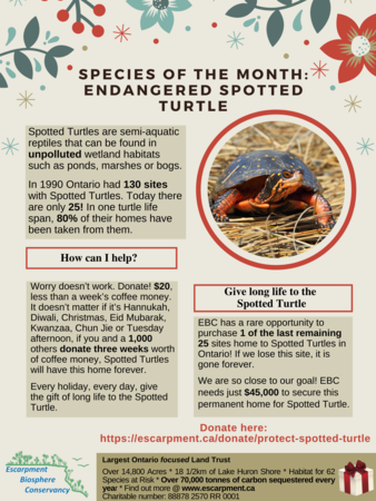 Spotted Turtle Final Giving Tuesday (4)